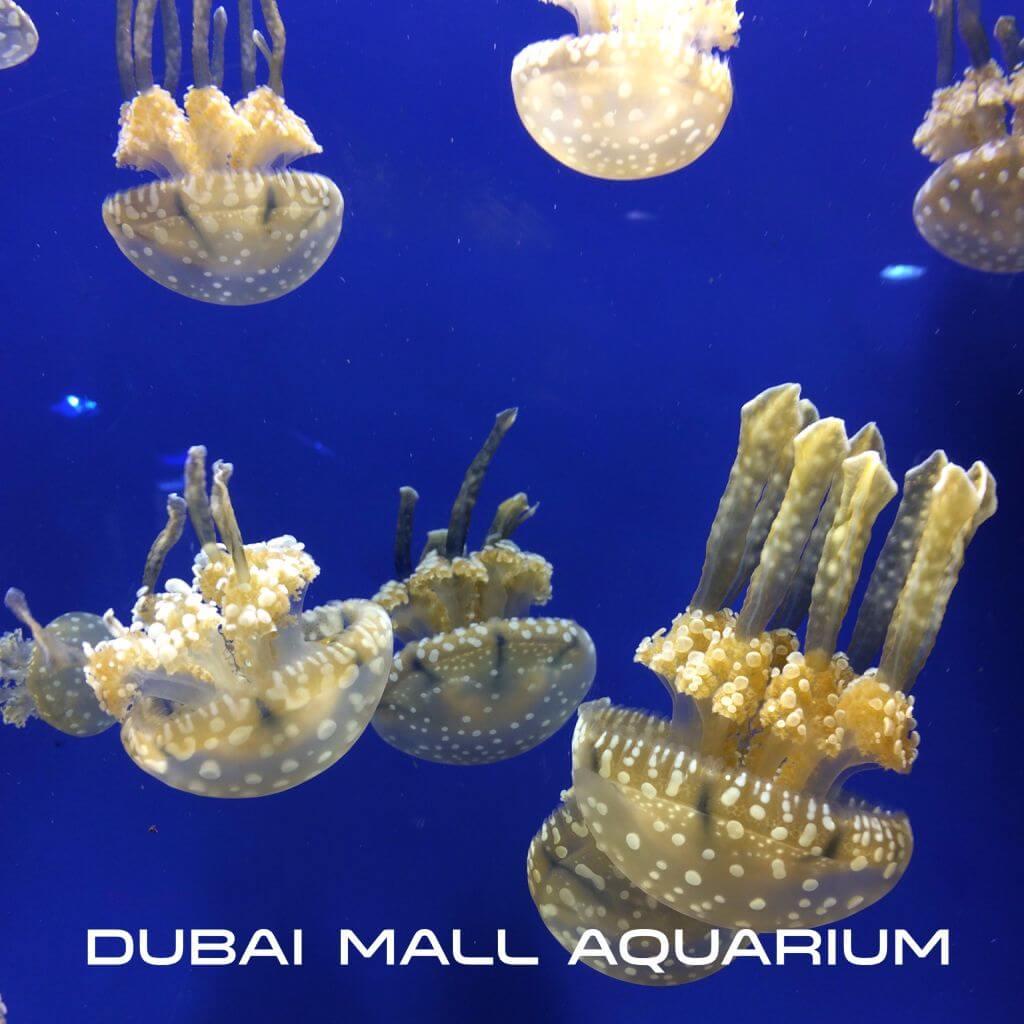 20150811_Dubai-2015-08_0484