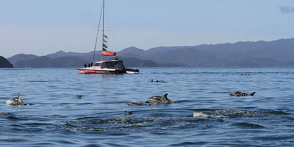 b-dolphins-carino