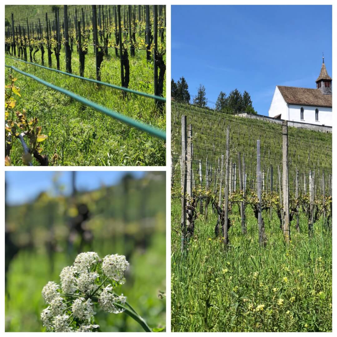 A Wonderful Days Adventure with Wine Tasting at the Staatskellerei Zurich