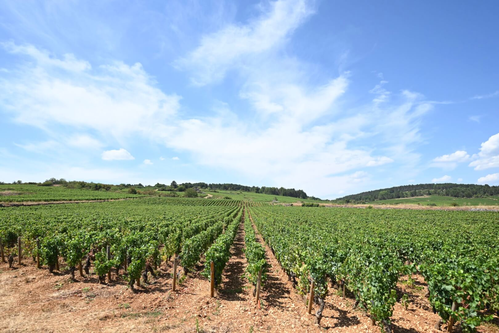 Top Tips for a Weekend in Burgundy